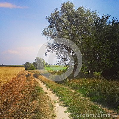 Rural Poland, road in summer fields