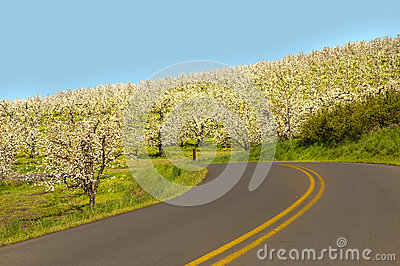 Rural road, apple orchards