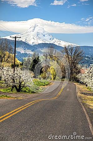 Rural road, apple orchards, Mt. Hood