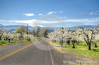 Rural road, apple orchards, Mt. Hood