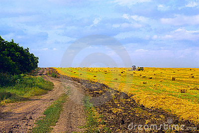 Rural road at harvest