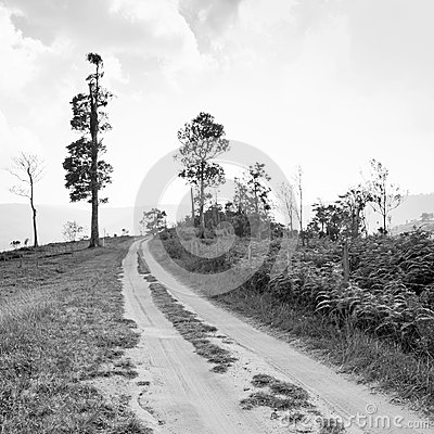 Rural road leading to the tree Stock Photo