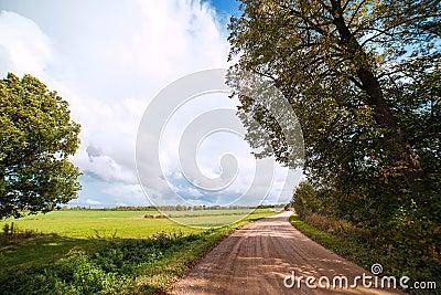 Rural road in summertime.