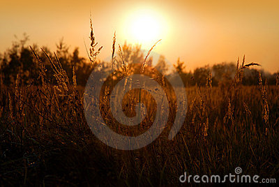 Rural scene - summer sunset