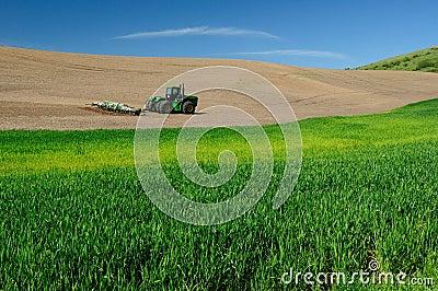 Rural scene of wheat field