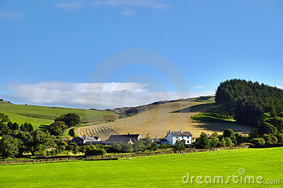 Rural Scene in the Yorkshire Dales