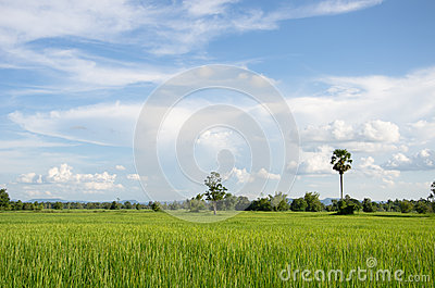 Rural of thailand