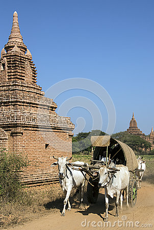 Rural Transport - Bagan - Myanmar (Burma)