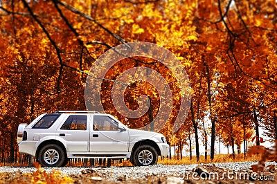 Rural travel in autumn