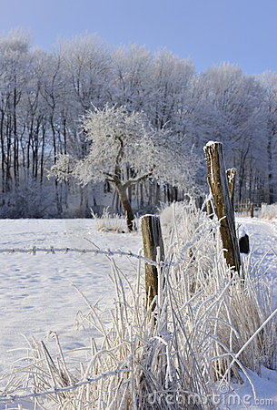Rural Winter Scene Stock Photography - Image: 8177232