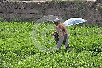 rural woman picked vegetables