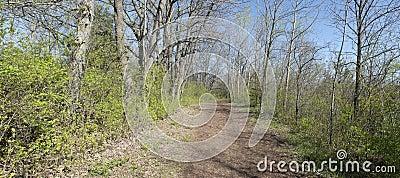 Rural Woods Road Path Panoramic, Panorama Banner