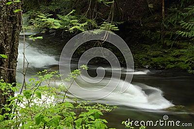 Rushing Mountain Stream, Whistler, British Columbi