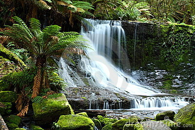 Russel Falls Mt Field National Park, Tasmania, Aus
