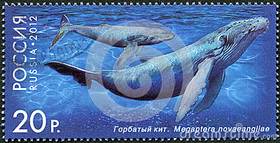 RUSSIA - 2012: shows Humpback Whale, series