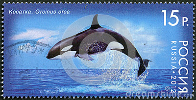 RUSSIA - 2012: shows Killer Whale, series Fauna of Russia. Whales
