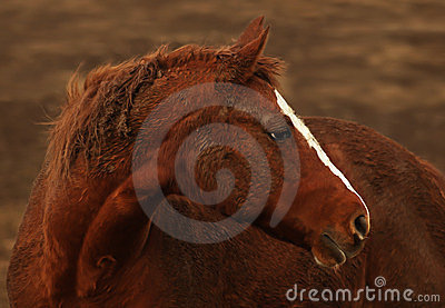 Rust colored horse portrait