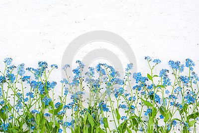 Rustic Border of blue forget-me-not flowers on white background Stock Photo