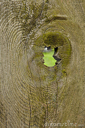 Rustic Fence with Knothole