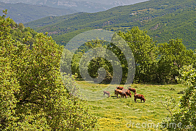 Rustic scenery at Pindos mountains in Greece