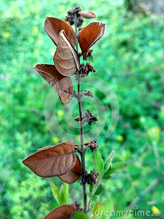 Rusty branch on a blurry green flower background Stock Photo