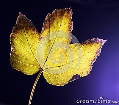 Rusty leaf