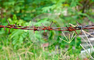 Rusty old barb wire surrounding farming property