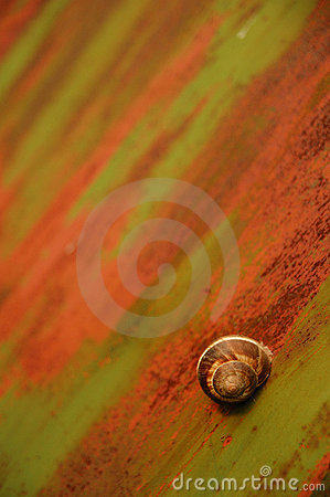 Free Rusty Snail Stock Images - 6928884