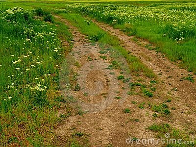 Rut-filled dirt road or path through meadow