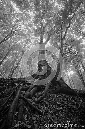 Árvore com raizes molhadas em uma floresta