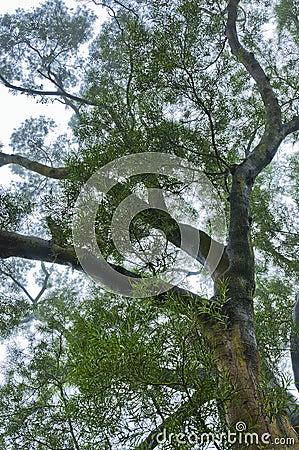 Árvore na névoa