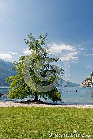 Árvore no lago