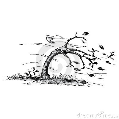 Árvore no vento