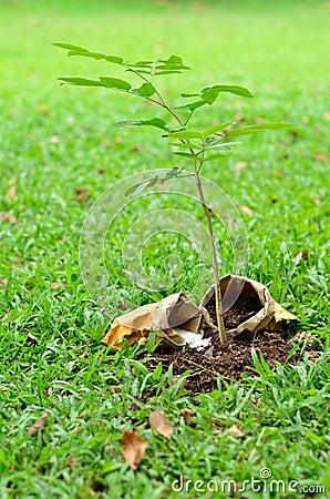 Árvore que cresce com nutriente