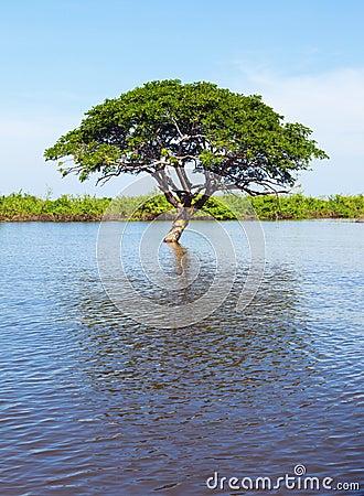 Árvore solitária na água