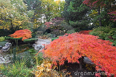Árvores de bordo no jardim japonês