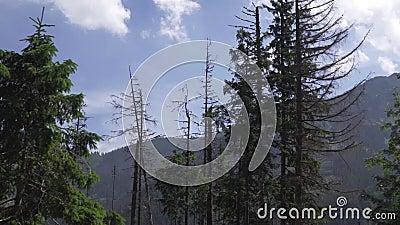 ?rvores na floresta contra o c?u video estoque
