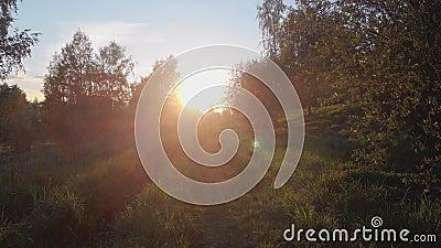 ?rvores no parque na noite Luz solar adiante vídeos de arquivo