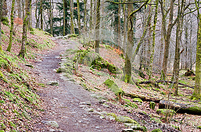 Rydal Forest Path