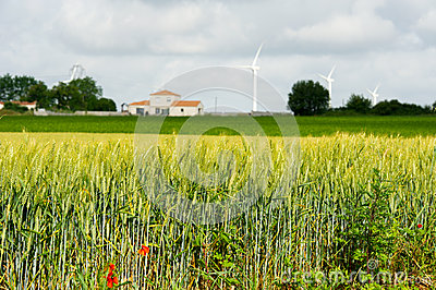 Rye field with farmhouse and wind turbines