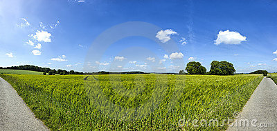 Rye field panorama with blue sky and clouds