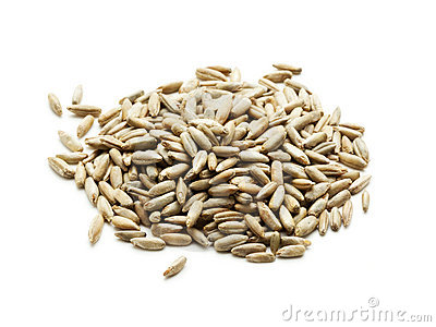 Rye grain isolated