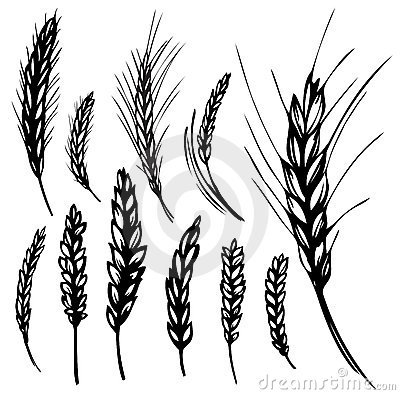 Free Rye, Wheat Royalty Free Stock Photos - 15251138