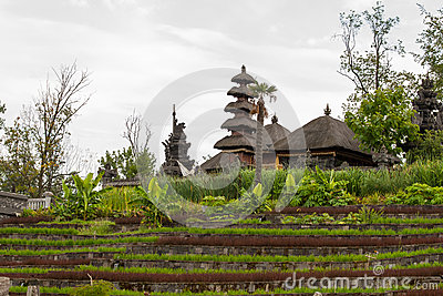 Ryżu pola z wioską w tle