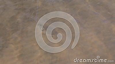 Rzeczny jazgarz na smyczu w wodzie łapiącej na połowu sprzęcie Konceptualny przyzwyczajenie, zależność, retencja zdjęcie wideo