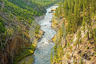 Rzeczny Yellowstone