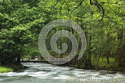 Rzeka w wiośnie