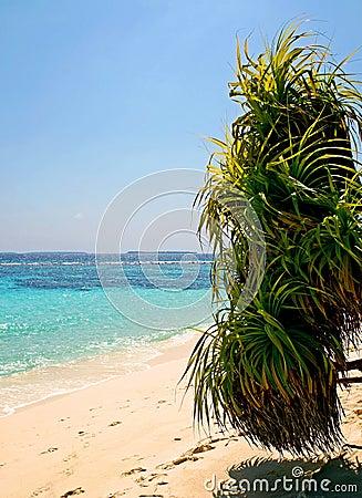 Sätta på land palmträdet