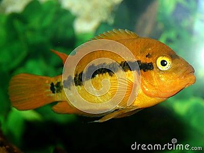 Série III de poissons