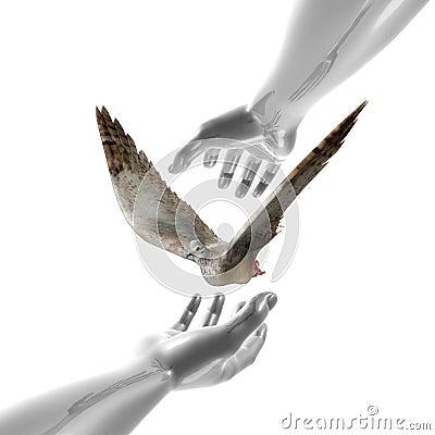 Símbolo calmo da pomba e das mãos
